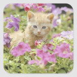 Gatito en flores calcomanías cuadradass personalizadas