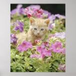 Gatito en flores póster