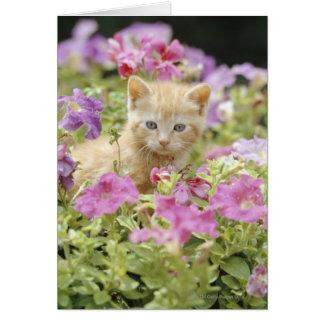 Gatito en flores tarjeta de felicitación