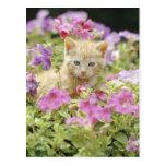 Gatito en flores tarjeta postal