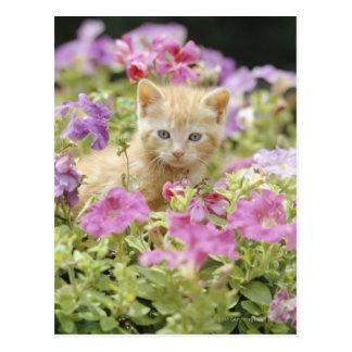 Gatito en flores postal