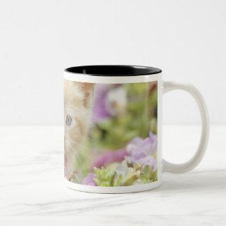 Gatito en flores taza de dos tonos