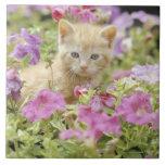 Gatito en flores tejas  ceramicas