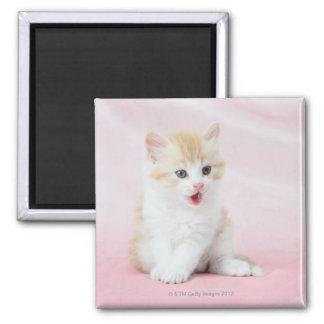 Gatito en fondo rosado imán cuadrado