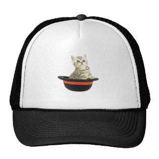 Gatito en gorra negro