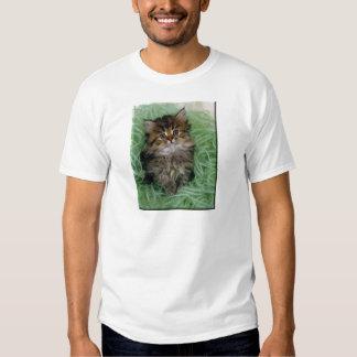 Gatito en hilado verde polera