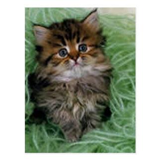 Gatito en hilado verde postal