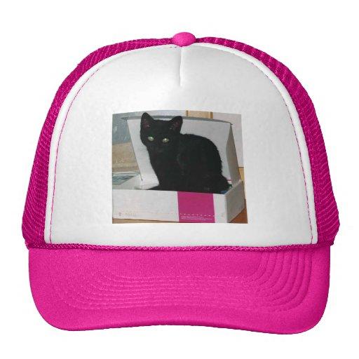 Gatito en la caja (color) gorros bordados