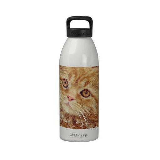Gatito en nieve botellas de agua reutilizables