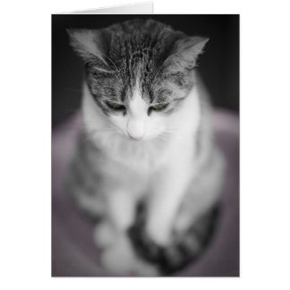 Gatito en rosa tarjeta de felicitación