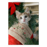 Gatito en tarjetas de Navidad de la media