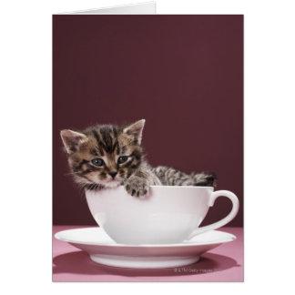 Gatito en taza y platillo tarjeton