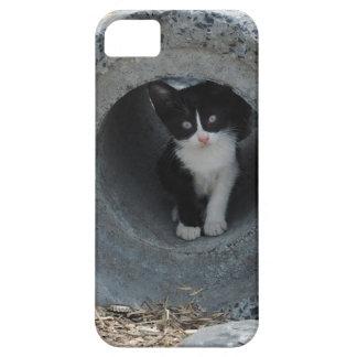 Gatito en tubo funda para iPhone SE/5/5s