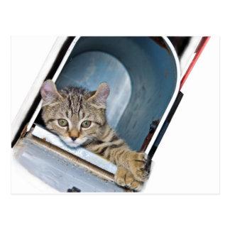 Gatito en un buzón postales