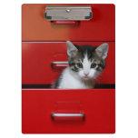 Gatito en un cajón rojo