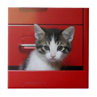 Gatito en un cajón rojo azulejo cuadrado pequeño