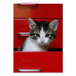 Gatito en un cajón rojo tarjeta de felicitación