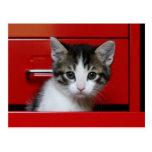 Gatito en un cajón rojo tarjetas postales