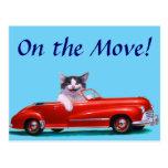 Gatito en un convertible rojo postal