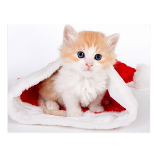 Gatito en un gorra de Santa Tarjeta Postal
