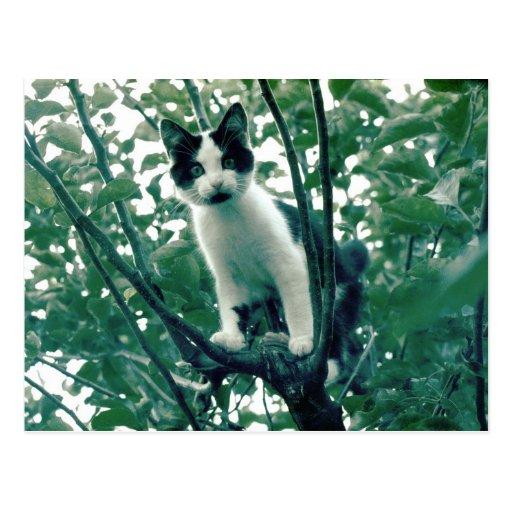 Gatito en un manzano postales