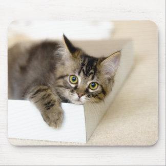 Gatito en un mousepad de la caja
