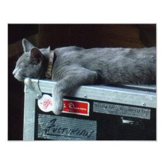 Gatito en una caja de viaje cojinete