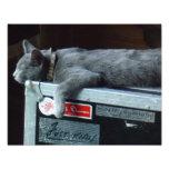 Gatito en una caja de viaje impresion fotografica