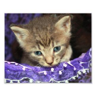 Gatito en una cesta de pascua impresión fotográfica