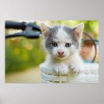 Gatito en una cesta en una bicicleta póster