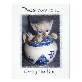 Gatito en una invitación de la jarra