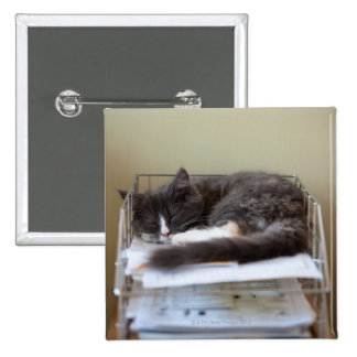 Gatito en una oficina en caja pin cuadrado