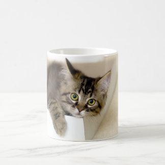 Gatito en una taza de la caja