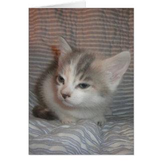 Gatito enfadado tarjeta de felicitación