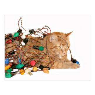 Gatito enredado del navidad tarjeta postal