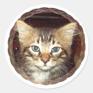 Gatito escaso pegatina redonda