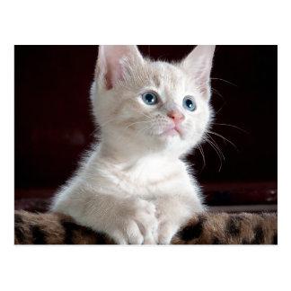 Gatito esperanzado postales
