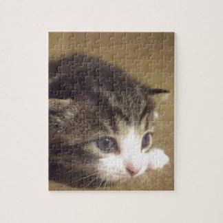 Gatito fascinado rompecabezas con fotos
