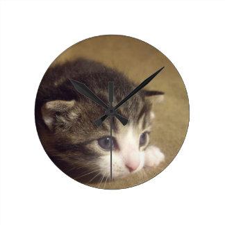 Gatito fascinado relojes