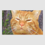 ¡Gatito feliz Kat! Etiquetas