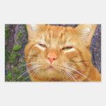 ¡Gatito feliz Kat! Pegatina Rectangular