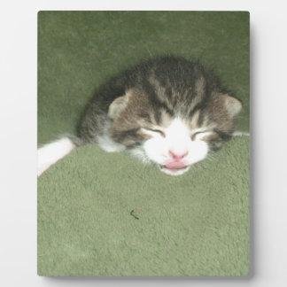Gatito fotogénico placa de plastico