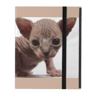 Gatito Furless lindo extraño de Sphynx