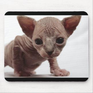 Gatito Furless lindo extraño de Sphynx Alfombrilla De Ratón