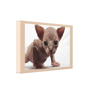 Gatito Furless lindo extraño de Sphynx Impresión En Lona Estirada