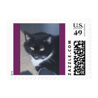 gatito, gato, blanco y negro, smoking, sello