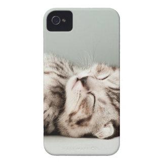 gatito, gato, gato de tabby lindo, gatos lindos, iPhone 4 Case-Mate cobertura