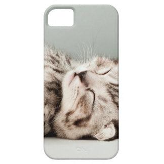 gatito, gato, gato de tabby lindo, gatos lindos, iPhone 5 carcasa
