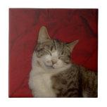 Gatito gris en rojo azulejo