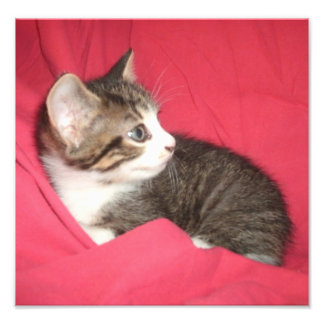 Gatito gris en rosa fotografías